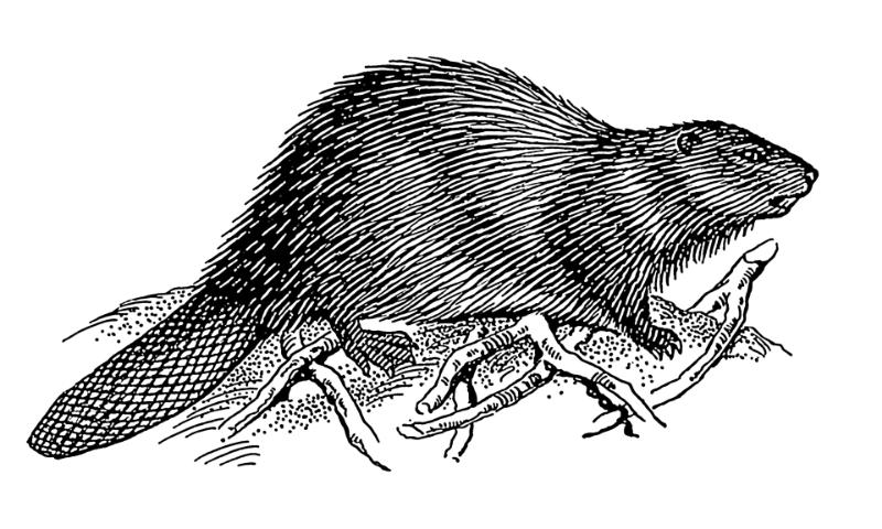 image via wikimedia commons.