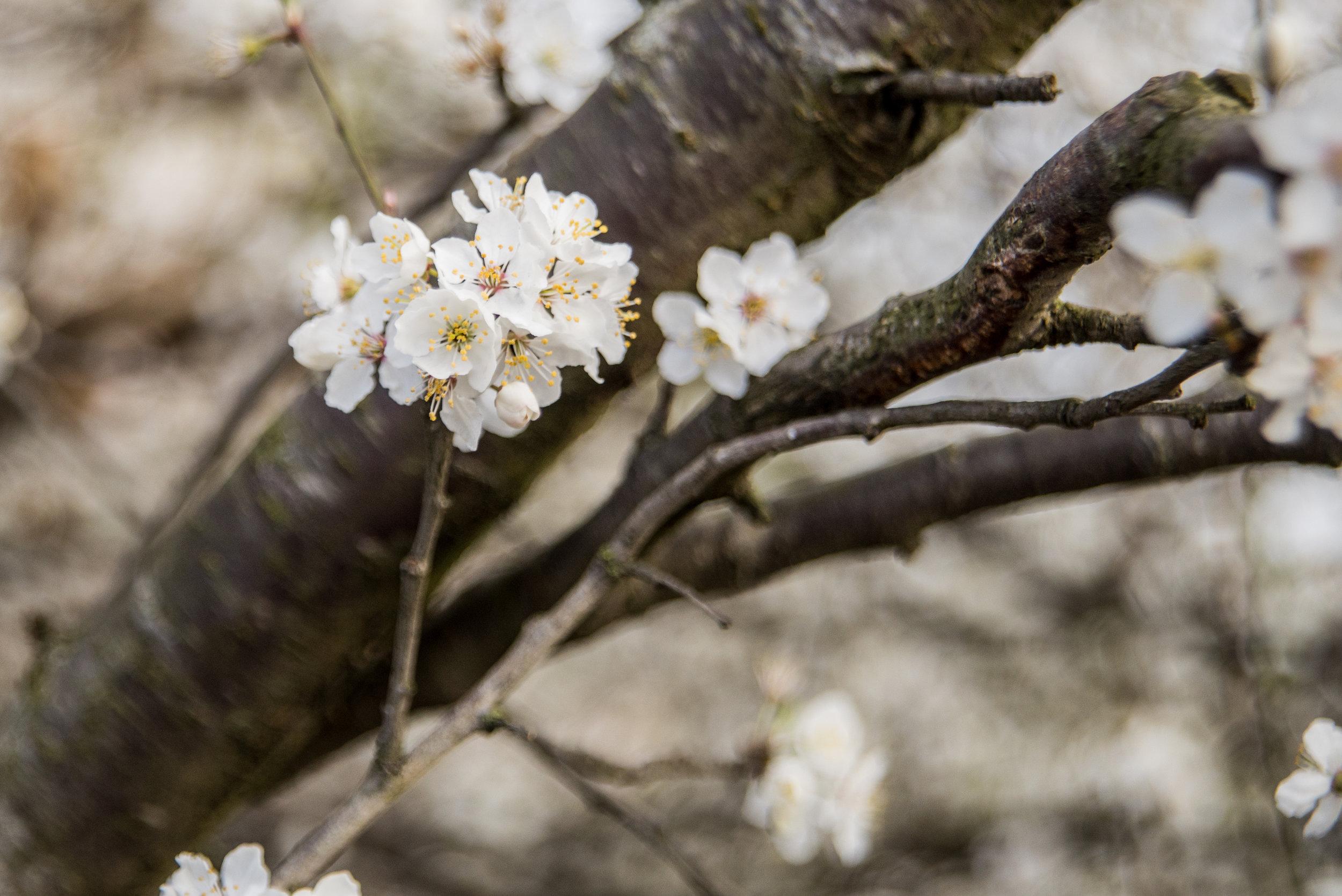 📷 Photo Information    Taken : 15 Mar 2017, 08:07:31   Camera: NIKON D610   Lens: NIKON Lens Model: 24.0-85.0 mm f/2.8-4.   Exposure Time: 1/1250   Aperture: f/4   ISO:  800   Focal Length:  66mm
