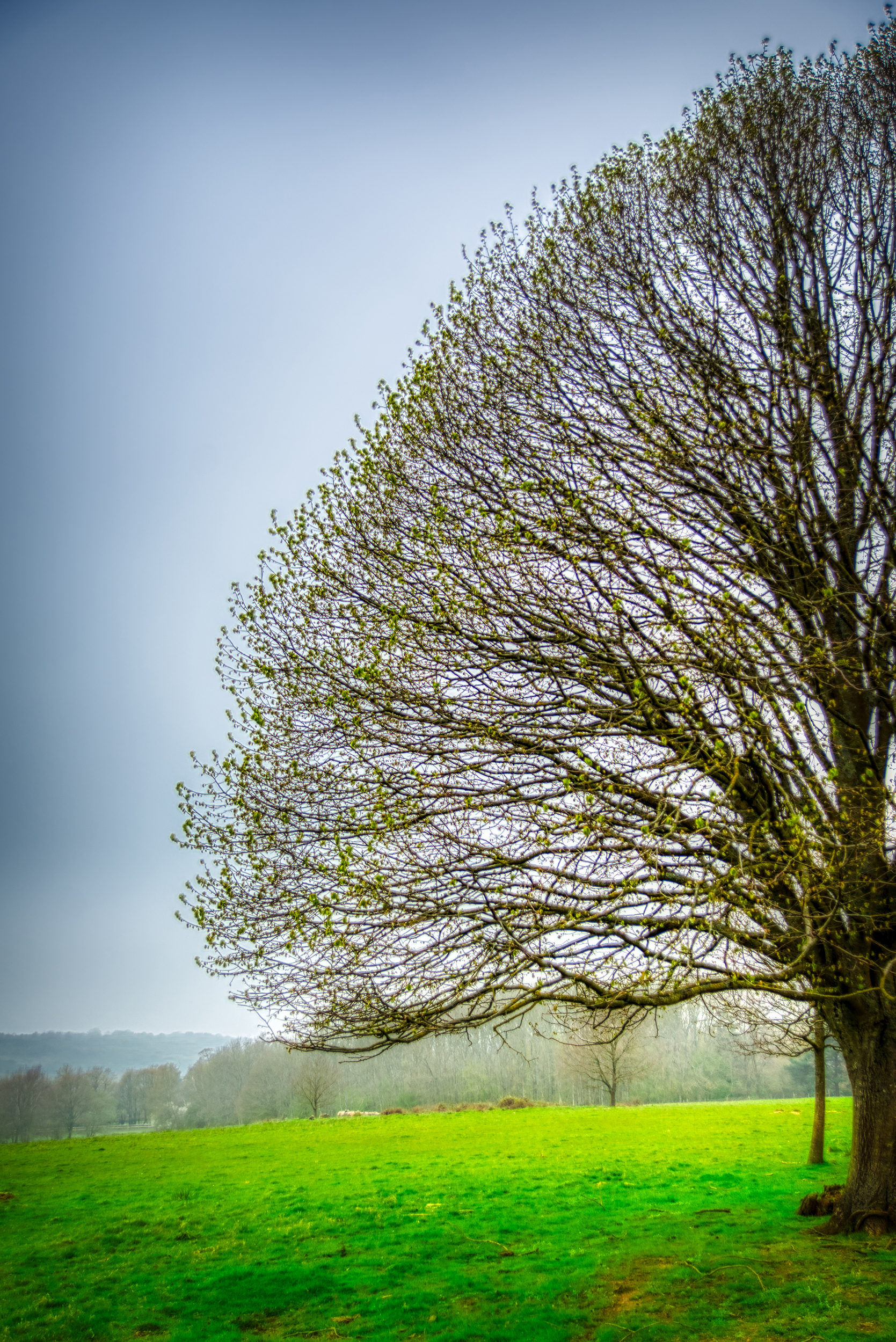 A Lonely Tree at Sheffield Park    📷 PHOTO INFORMATION    DATE TAKEN  2019-04-07 11:47:44   CAMERA  D610   CAMERA MAKE  NIKON   EXPOSURE TIME  1/800   APERTURE  F/3.5   ISO  125   FOCAL LENGTH  38MM