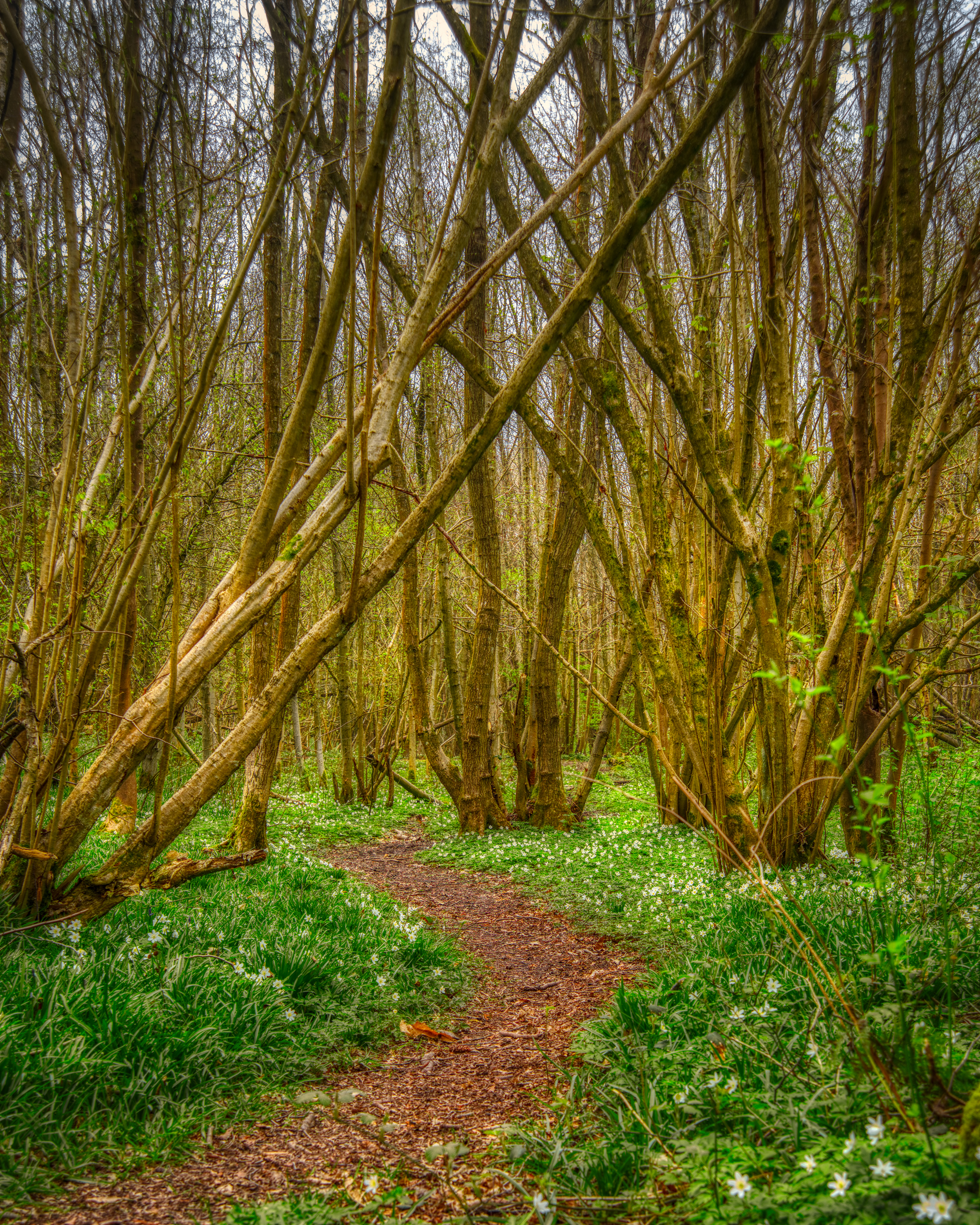 Into The Woodlands    📷 PHOTO INFORMATION    DATE TAKEN  2019-04-06 13:00:31   CAMERA  D610   CAMERA MAKE  NIKON   EXPOSURE TIME  1/25   APERTURE  F/8   ISO  100   FOCAL LENGTH  45MM