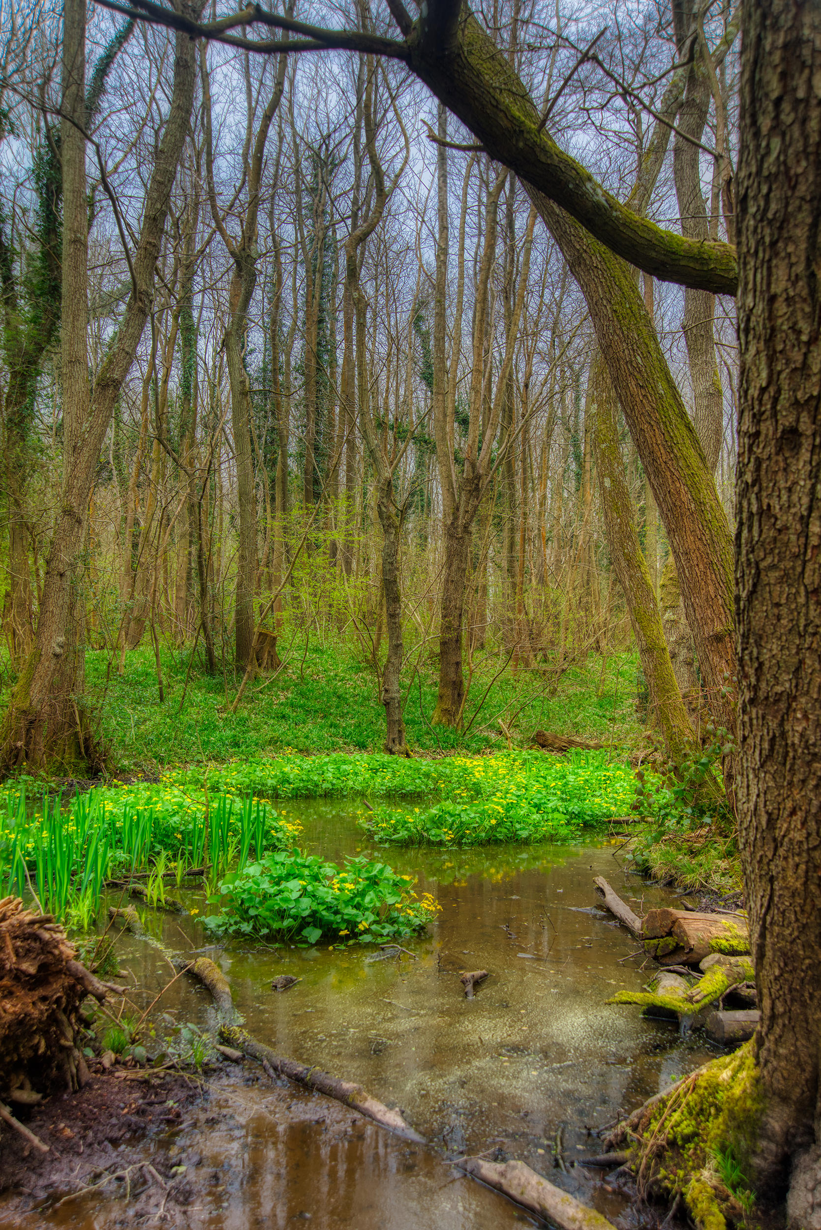 Hidden Woods of Sussex    📷 PHOTO INFORMATION    DATE TAKEN  2019-04-06 13:23:46   CAMERA  D610   CAMERA MAKE  NIKON   EXPOSURE TIME  1/25   APERTURE  F/8   ISO  100   FOCAL LENGTH  32MM