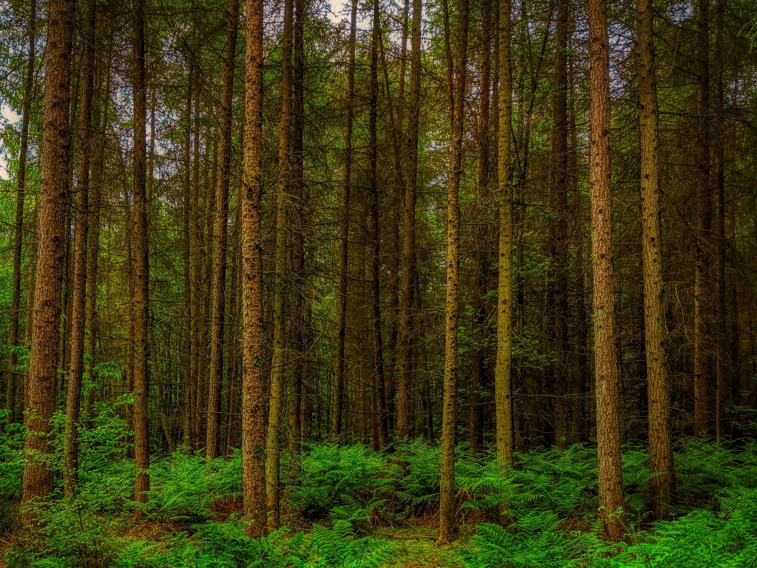trees hdr.jpeg