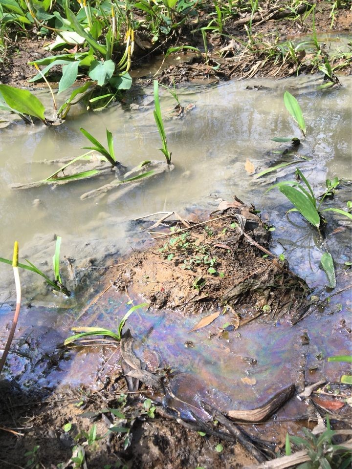 Sewage flows through a tributary of Dog River after a spill this year.