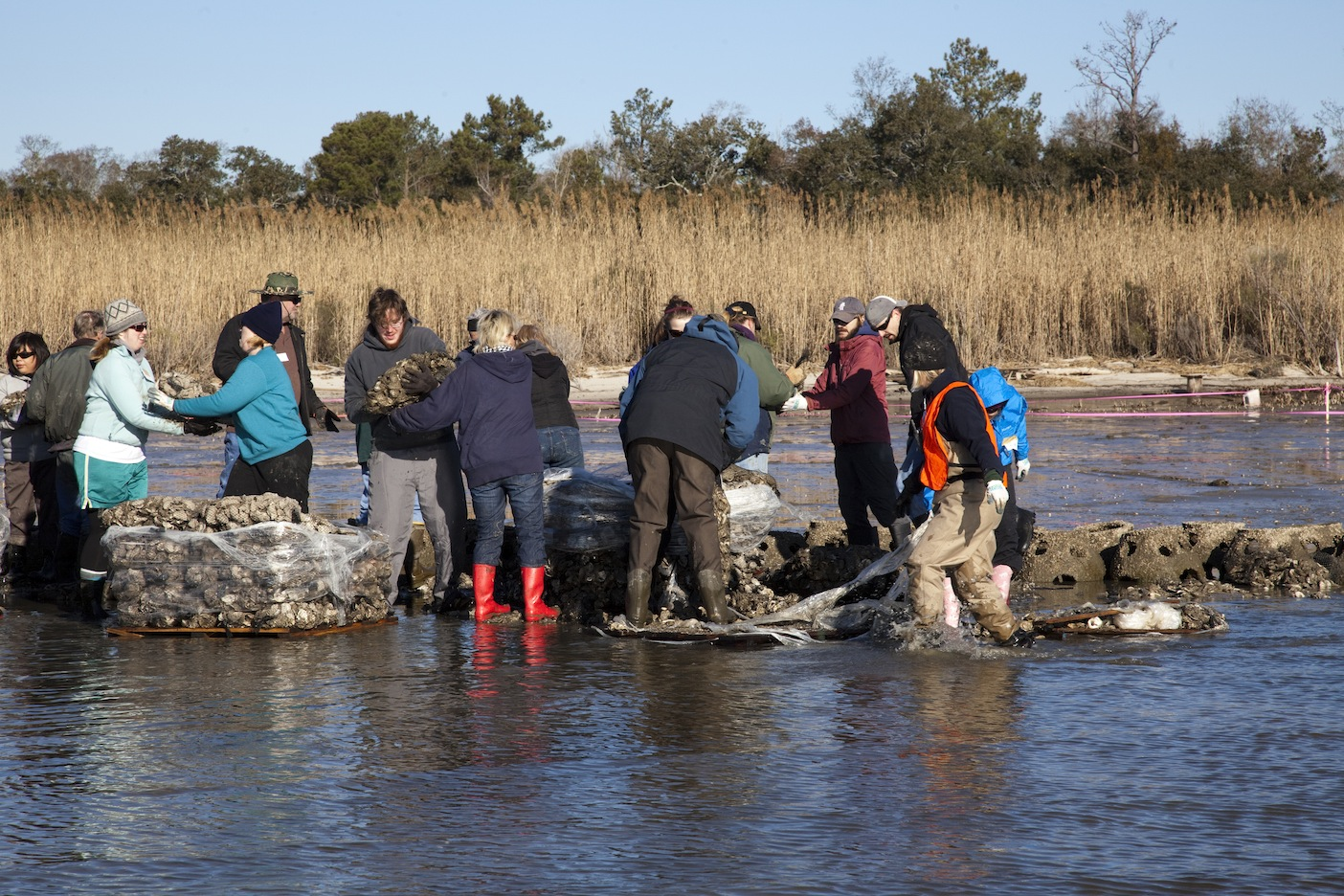 Volunteers help construct oyster reef at Helen Wood Park, January 2011.