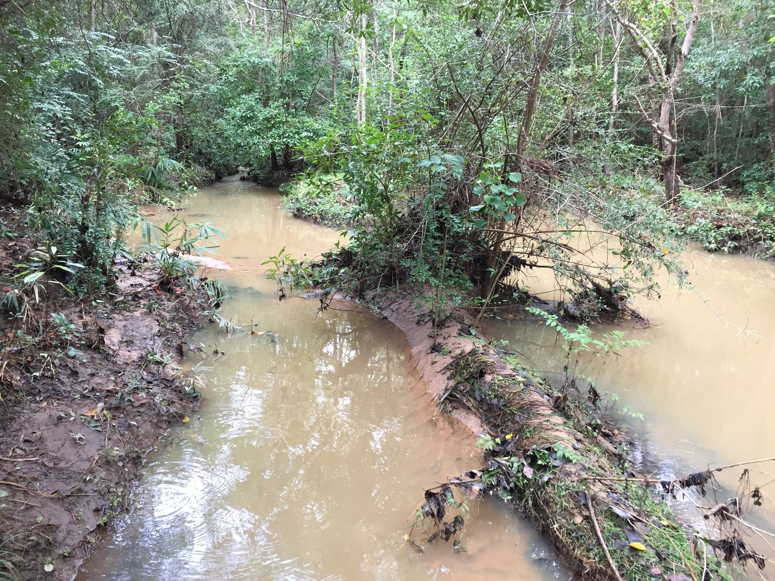 The headwaters of D'Olive Creek run brown with mud downstream of a poorly maintained construction site.