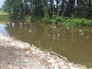 Daphne Utilities spilled more than one million gallons of raw sewage into D'Olive Creek (pictured above) on August 11, 2017.