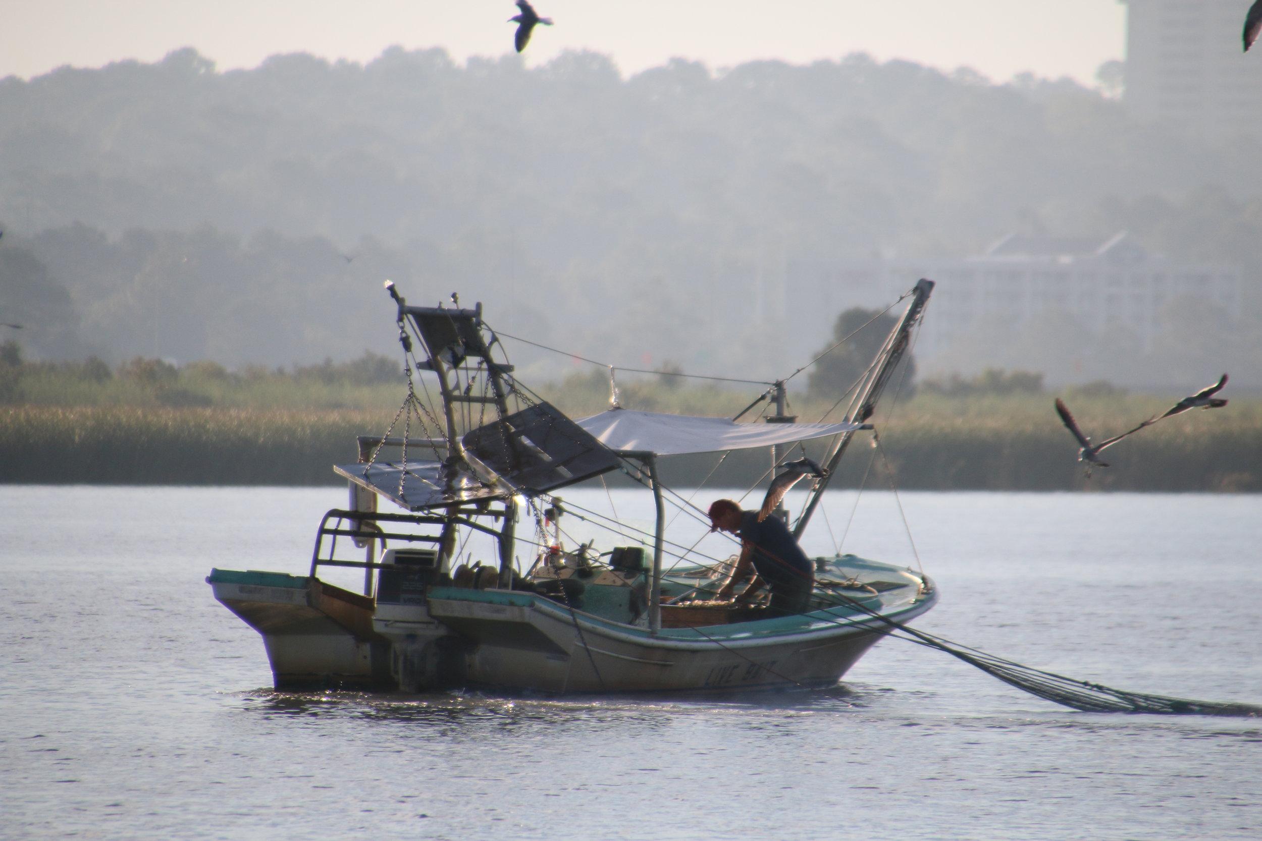 FishingW:BirdsClose.JPG