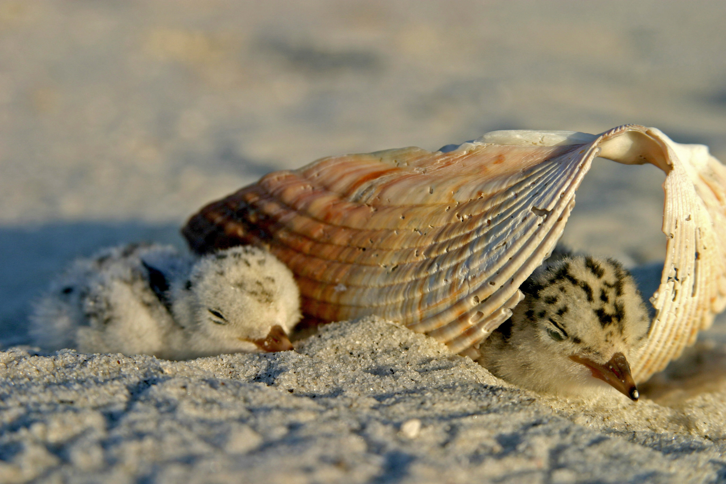 baby birds in shell.jpg
