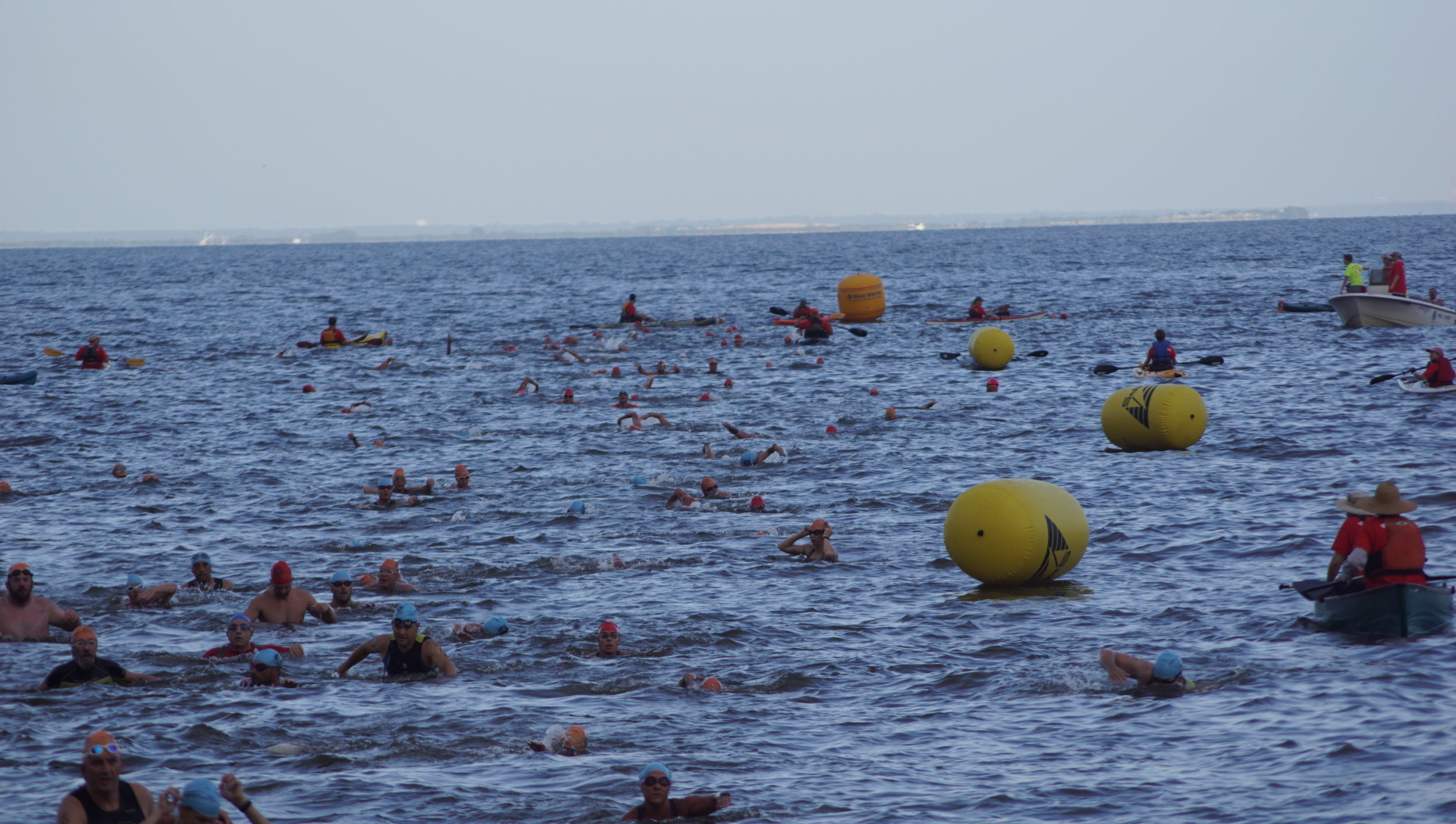Lots of swimmers 3.JPG