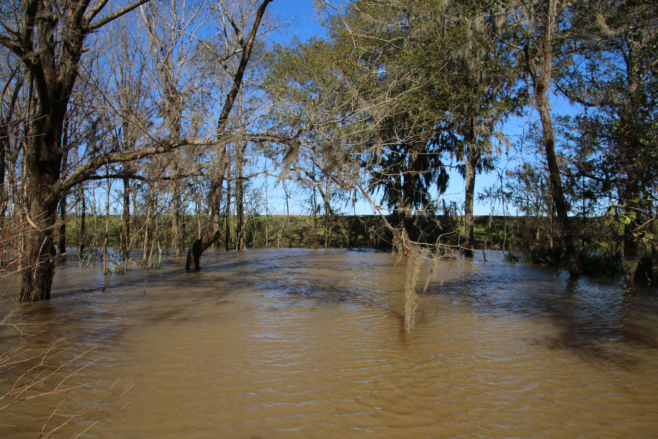 The earthen dam around the ash pit usually stands 25 feet above the surrounding landscape. As pictured here during river flooding on 01/09/2019it is covered by as much as 15 feet of water with only a small amount remaining above water.  Photo by Laura Stone - Mobile Baykeeper.