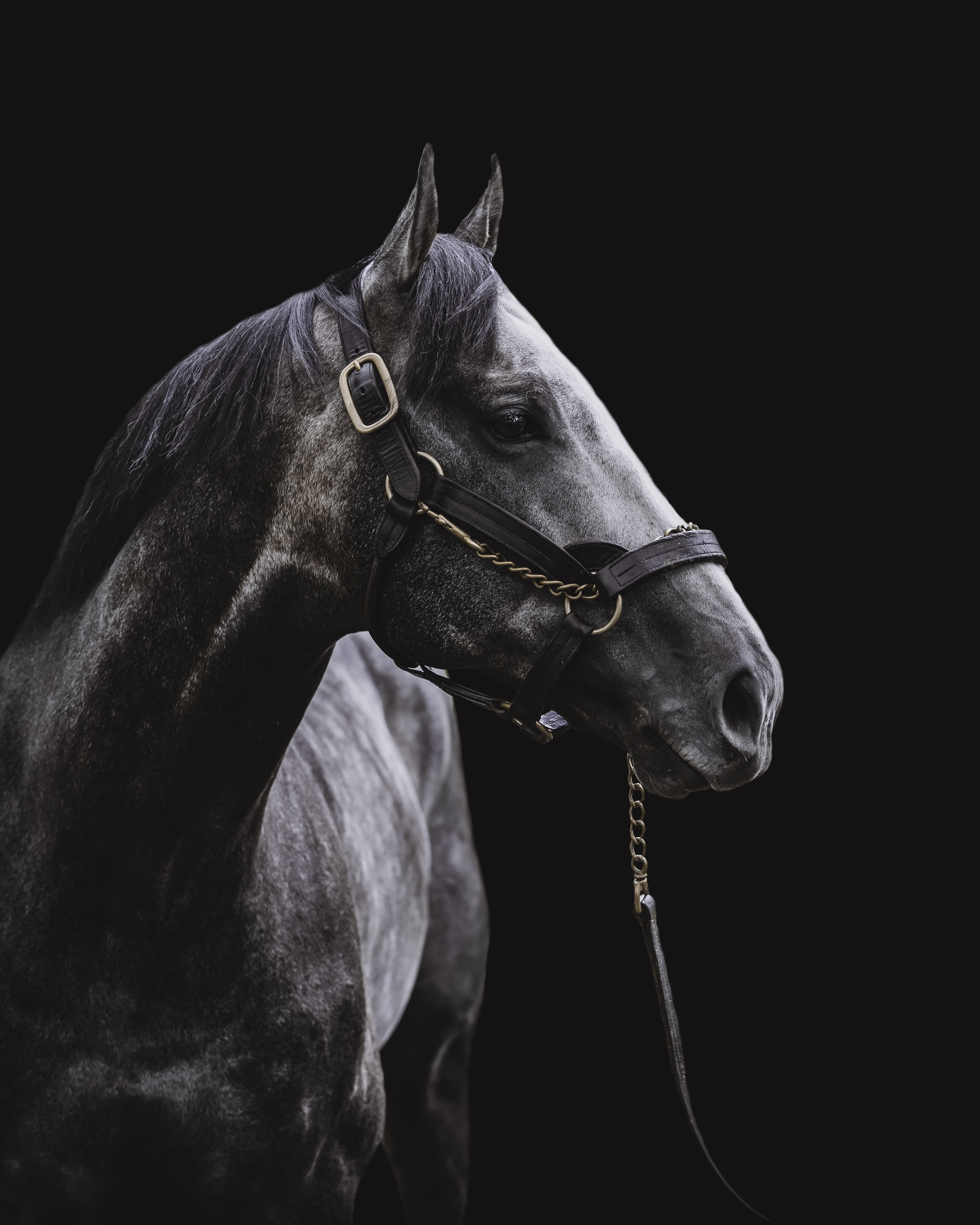 Arrogate - Arrogate, by Unbridled's Song and out of Bubbler, stands at Juddmonte Farms.Arrogate won the Travers Stakes in a track record, the Breeders' Cup Classic, the Pegasus World Cup in a new track record and the Dubai World Cup. he was named World's Best Racehorse of 2016.despite having only four stakes race wins, the large purses for these wins made him the all-time leading money earner in North America.so basically he won a lot of money and he's a big freaking deal.