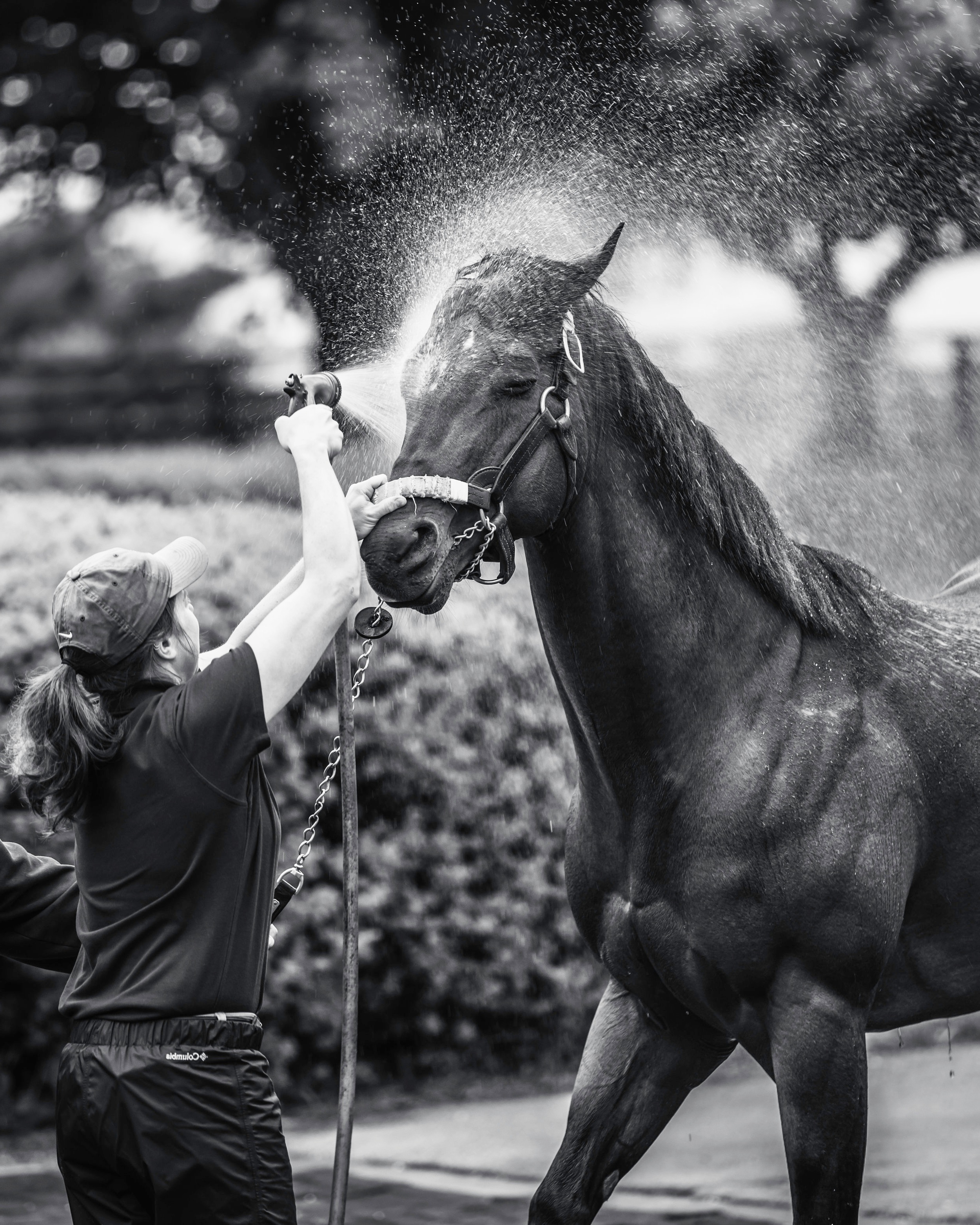 "Bath Time - love watching these horses get bath. they look so happy to be getting the grooming and yet so annoyed at how us silly humans go about it.""just not the ears human. not the ears!"""