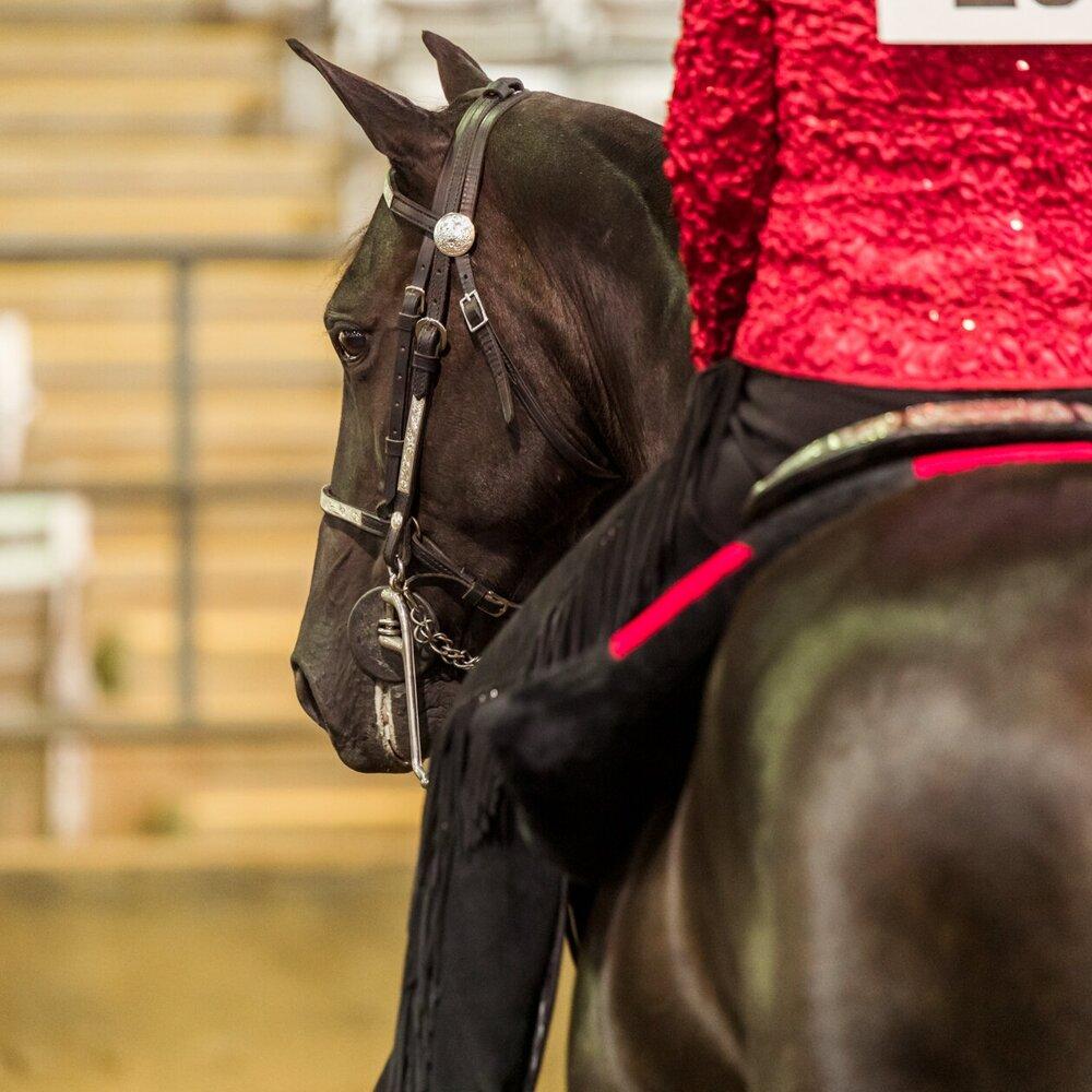 ANWARC // Gaited Horse Show - September 7, 2019