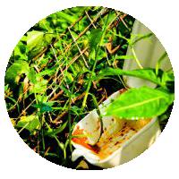 Styrofoamingrass-circle icon.png
