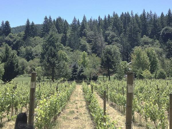 Teutonic Wine Company Pushes Boundaries in the Coast Range - How winemaker Barnaby Tuttle planted his first vineyard: beef jerky, a sleeping bag, and his wife's credit card. For the Capital Press.