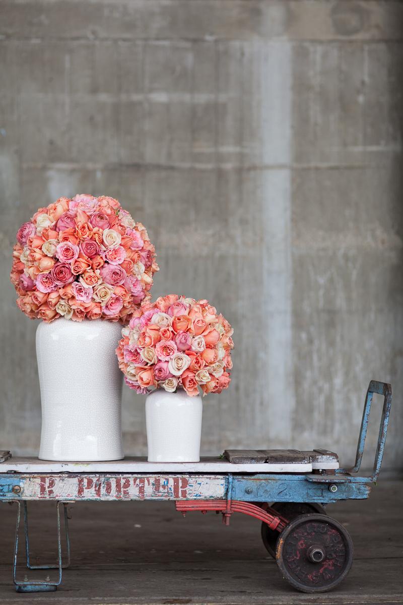 Garden Rose by McQueens
