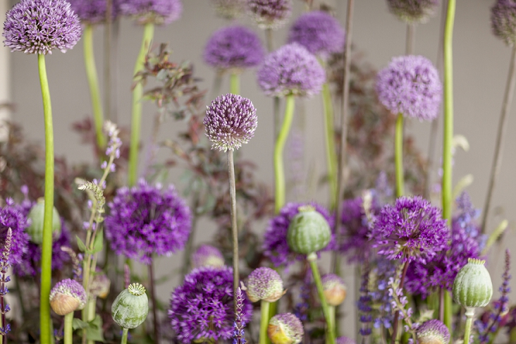 British Flowers Week 2015 Day 3 Alliums - Presented to you by New Covent Garden Flower Market