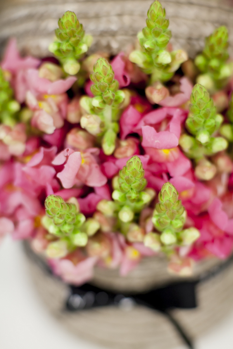 British Flowers Week 2015 Day 5 - Snapdragons - Presented to you by New Covent Garden Flower Market