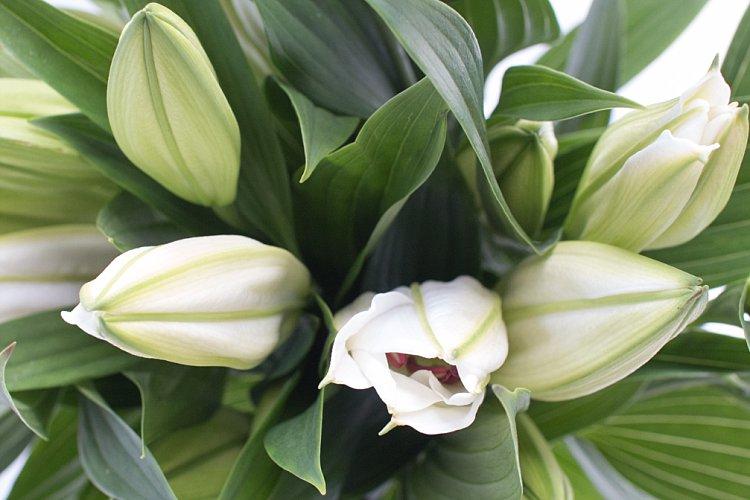 Day 1 British Flowers Week 2016 White lily Santander closed New Covent Garden Flower Market Flowerona photo