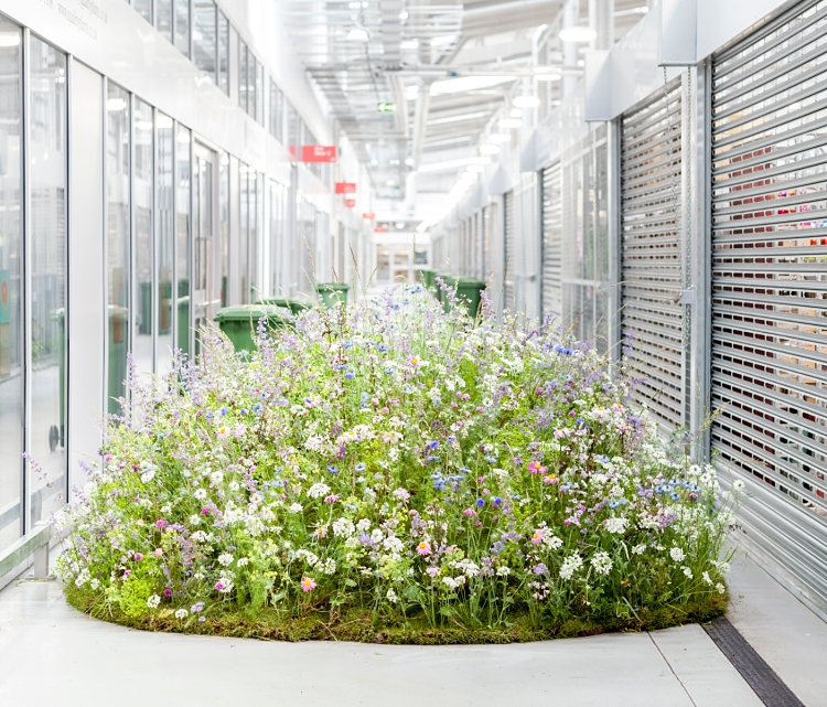 Carly Rogers' floral mound installation for British Flowers Week 2017 at New Covent Garden Flower Market