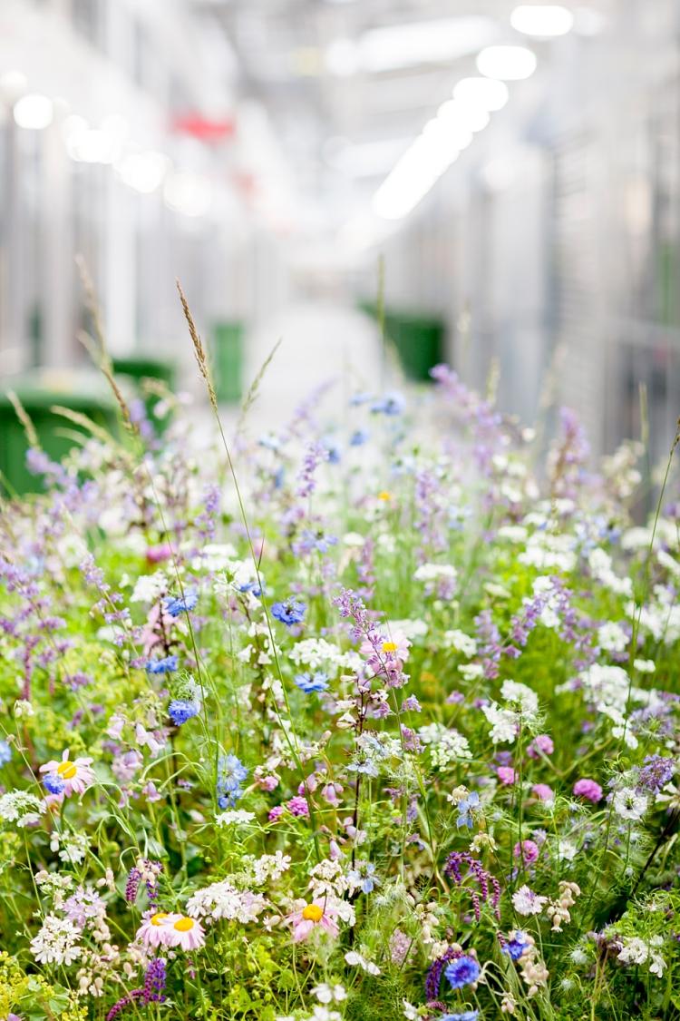 British-Flowers-Week-2017-Carly-Rogers-floral-mound-4-New-Covent-Garden-Flower-Market.jpg