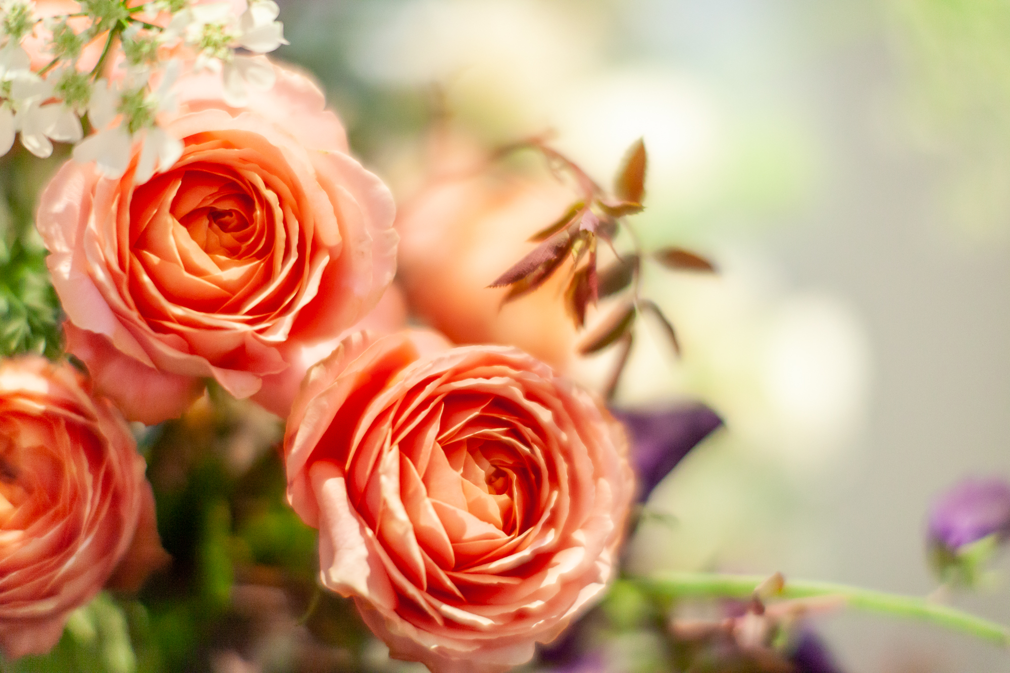 Floribunda-Rose-installation-British-Flowers-Week-2018-at-Garden-Museum-by-New-Covent-Garden-Market (9).jpg