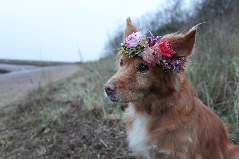 Graeme Corbett from Bloom + Burn's dog Molly wearing a flower crown.jpg