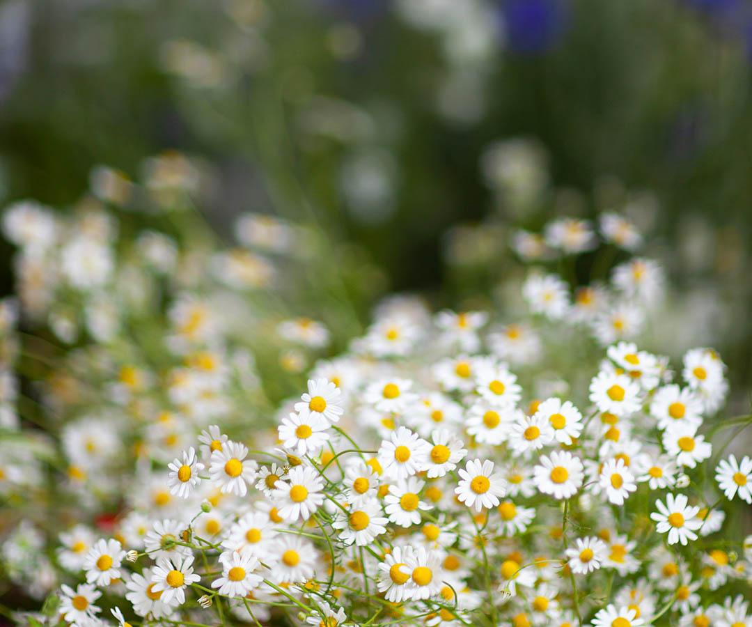 Rowan Gilmour, Rowan Blossom