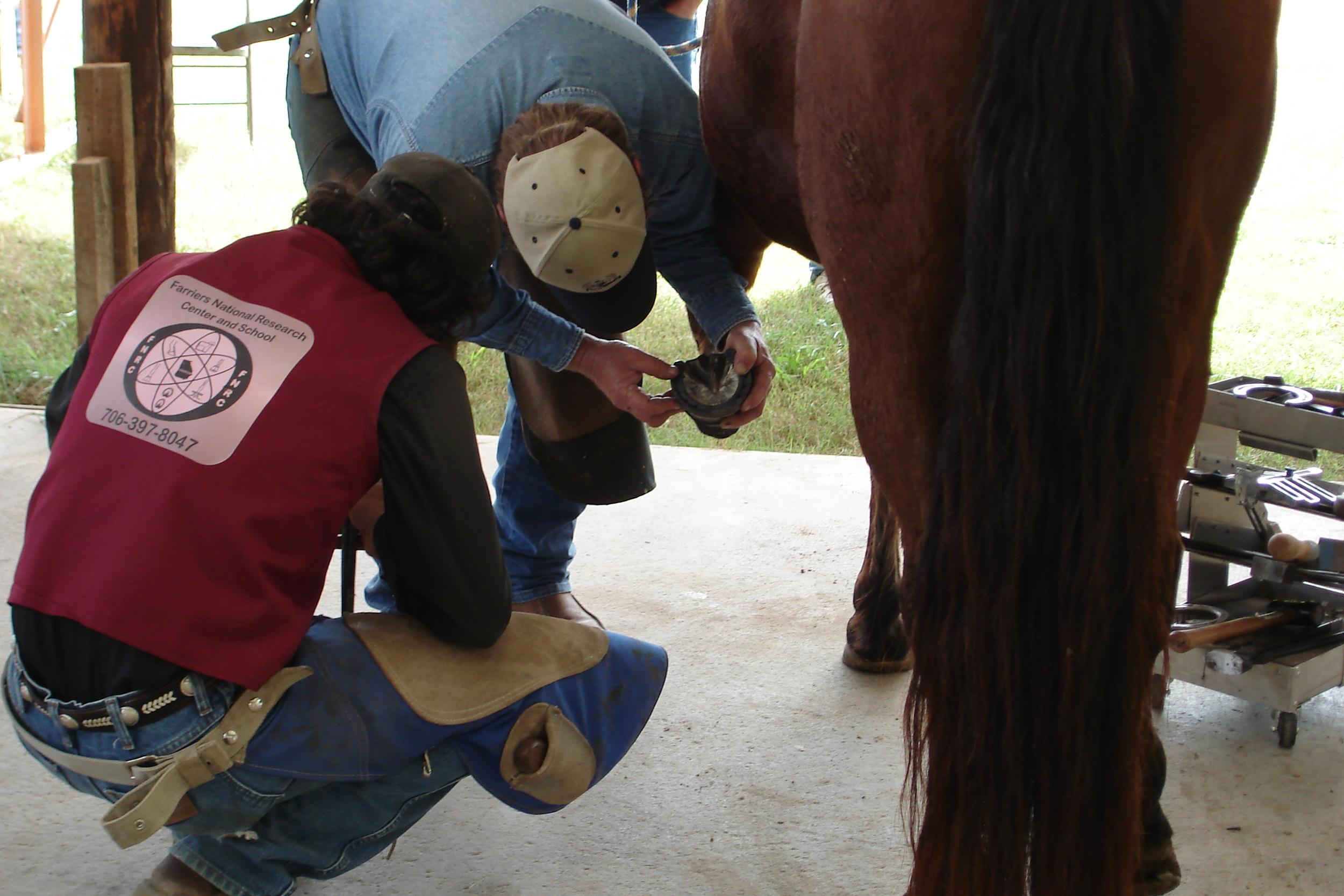 Continuing Education — Casey & Son Horseshoeing School