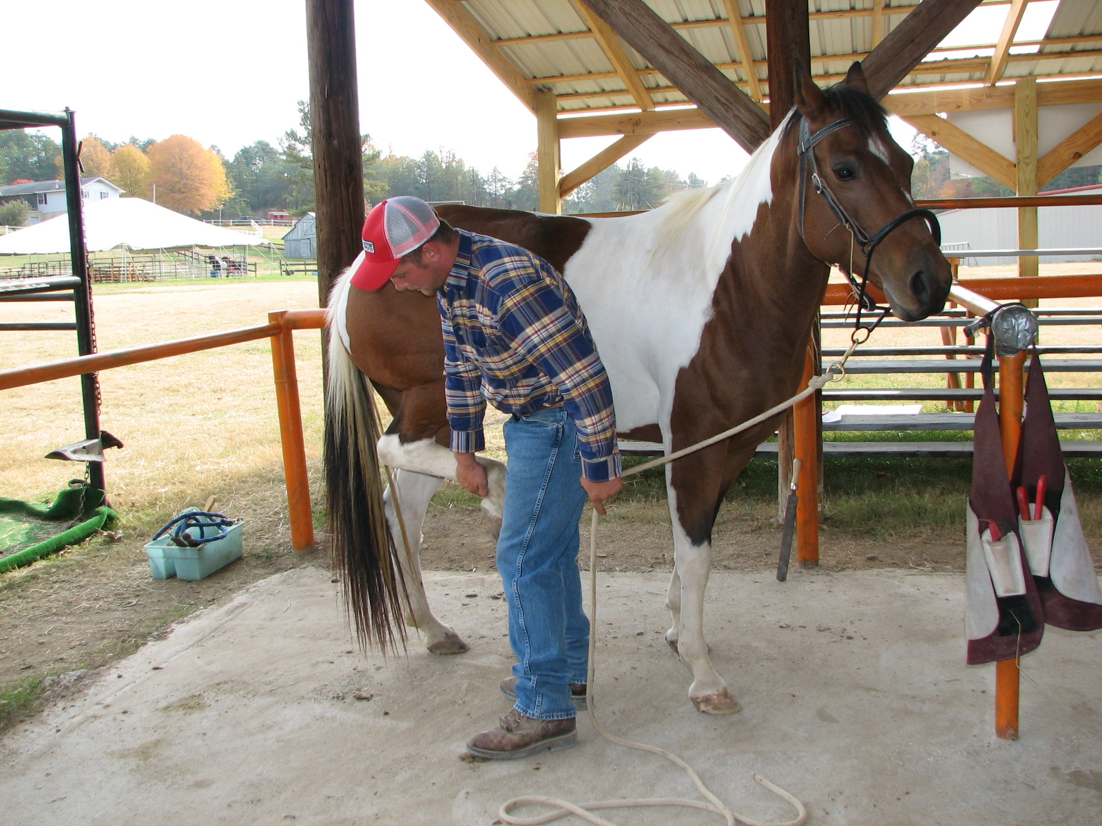 Farrier Safety using the Noavel Headstall - step 1.jpg