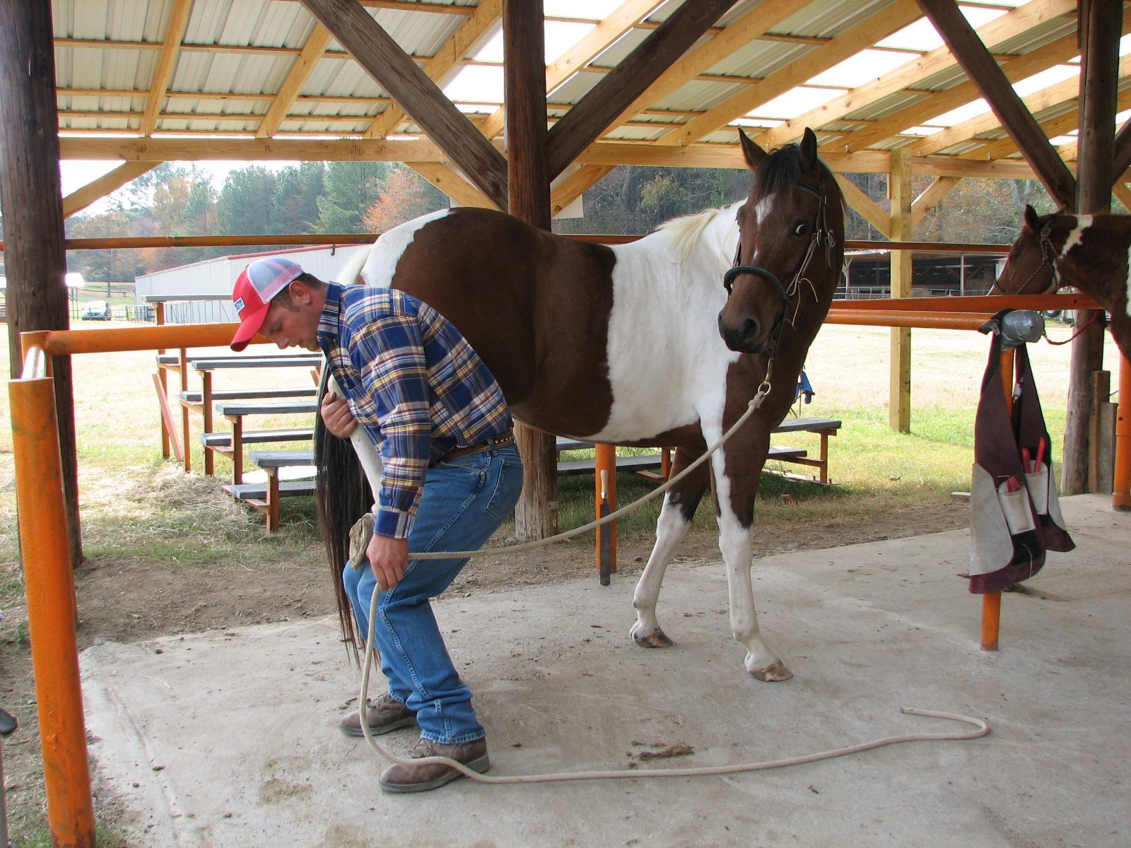 Safe Horse Handling