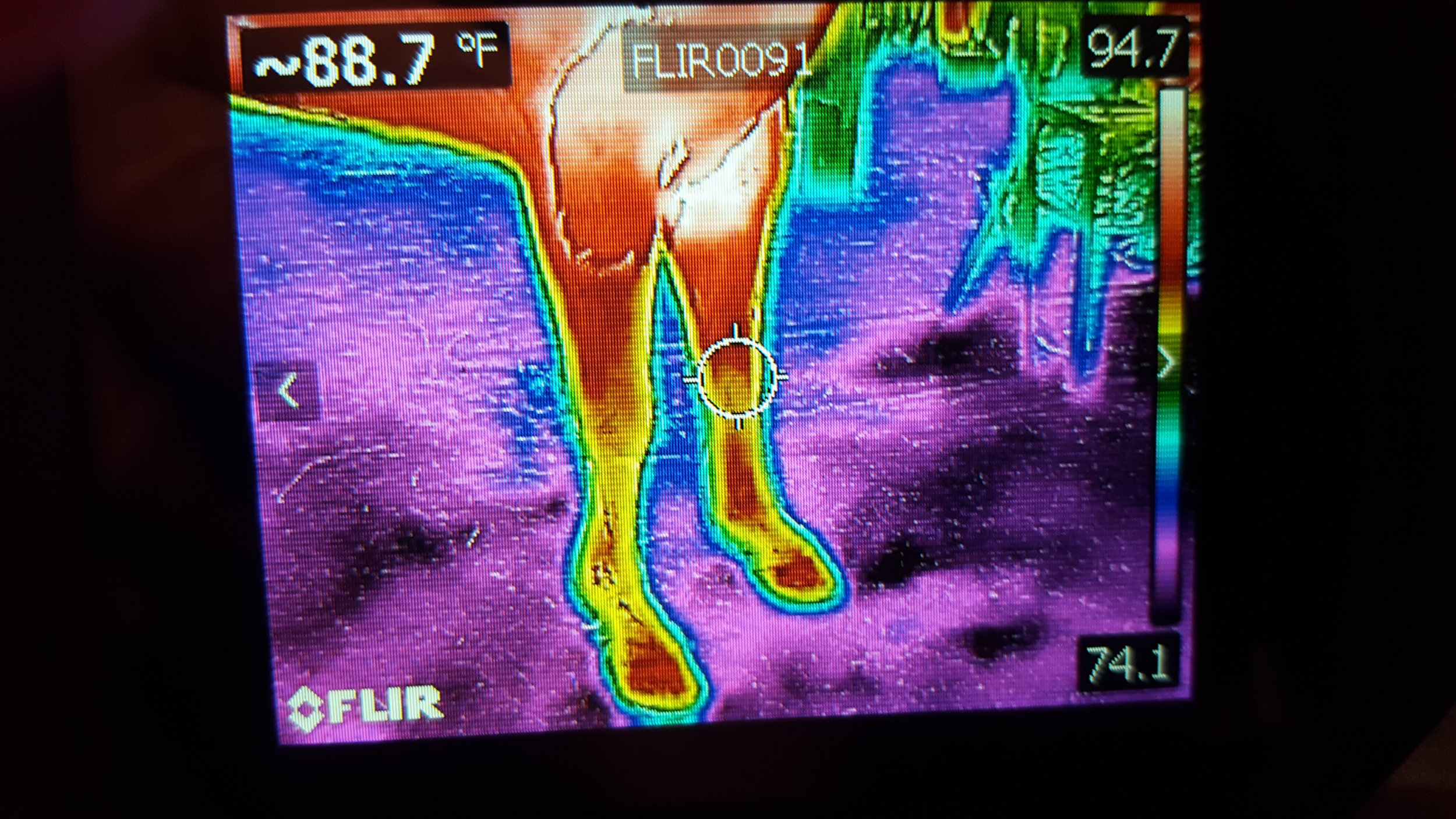 During the first 15 minutes of Equine Flexion Therapy:  This picture shows improved blood circulation and better movement from the horse.