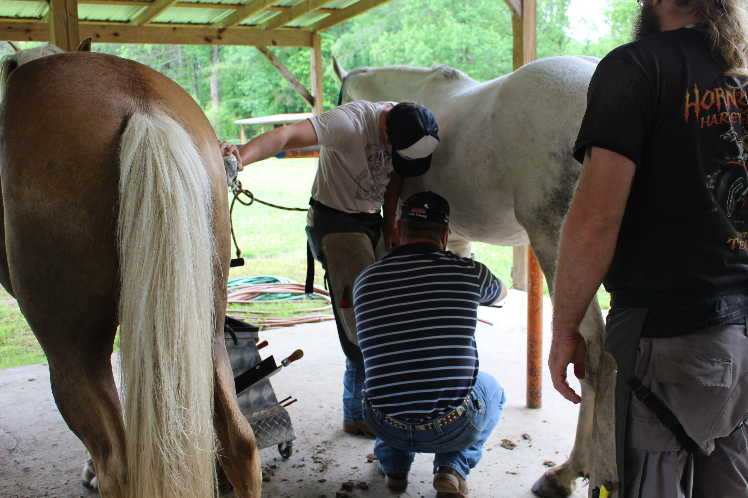 Casey & Son Horseshoeing School of Georgia farrier students shoeing, Link Casey, Owner Instructor