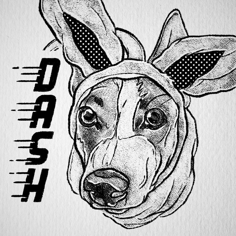 022_Dash.jpg