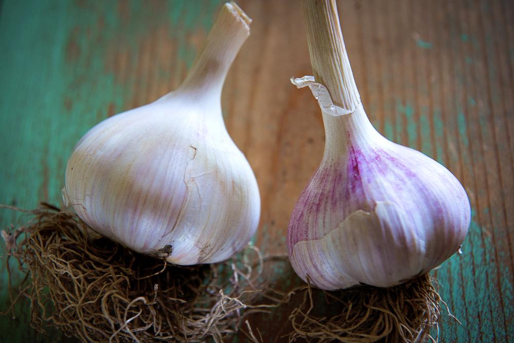 Meadowlark's fine Redgarlic  Siberian Garlic