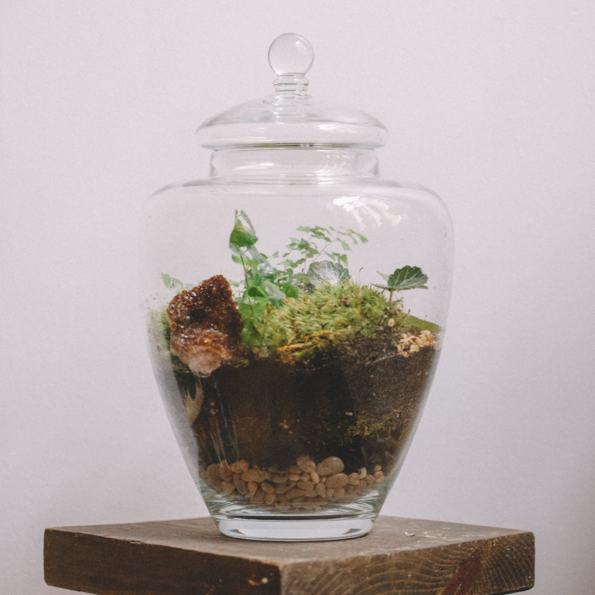Terrariums Flowers And Weeds