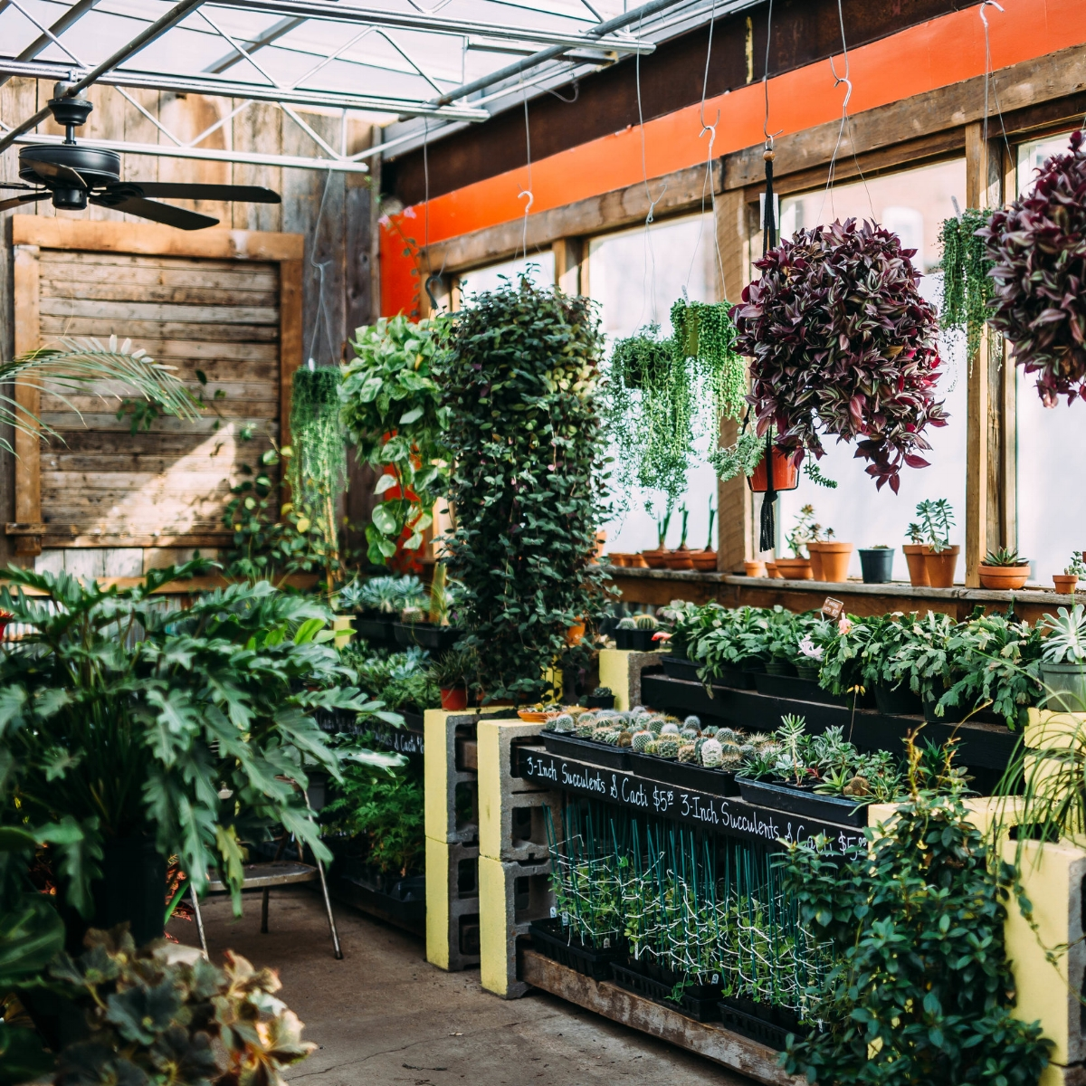Photo by Cindy Lee