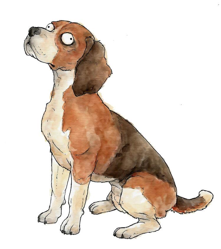 Beagle_72_12X12.jpg