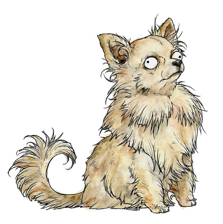 Chihuahua_72_12X12.jpg