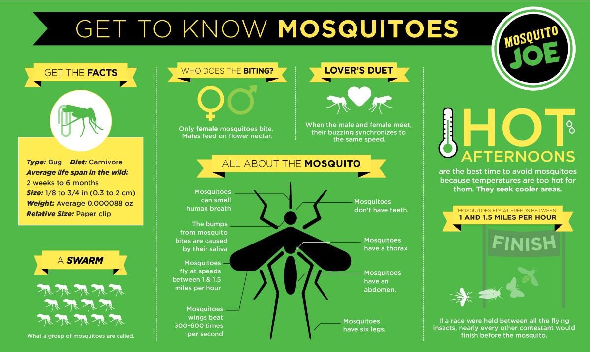 Mosquito Joe   Infographic