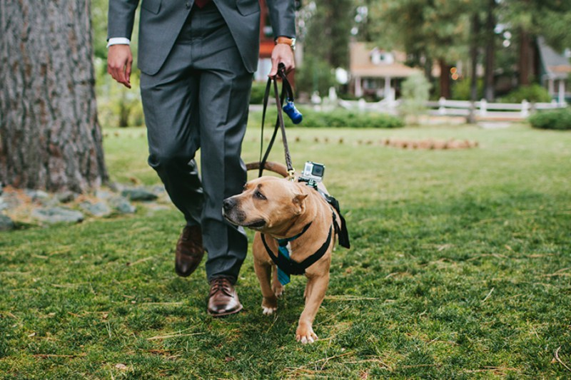 "Can we please talk about how adorable that tie is?  And- side note- strapping a Go-Pro camera on your baby to get a ""pup's eye view"" of the wedding day is  genius .  