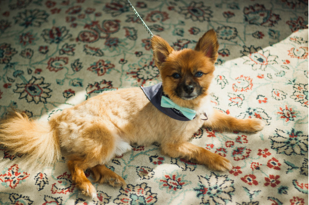 This little one looks oh-so-dapper in his bow tie.  |  Photo by  Ryan Eyestone  via  Rock n' Roll Bride