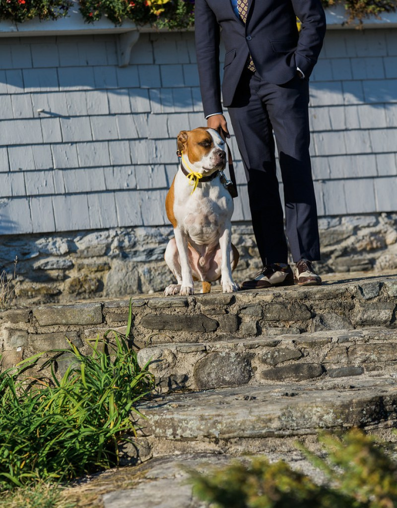 Apollo, the Pit Bull (Ring Bearer)  |  Photo by  Colleen Macmillan Photography  via  Offbeat Bride
