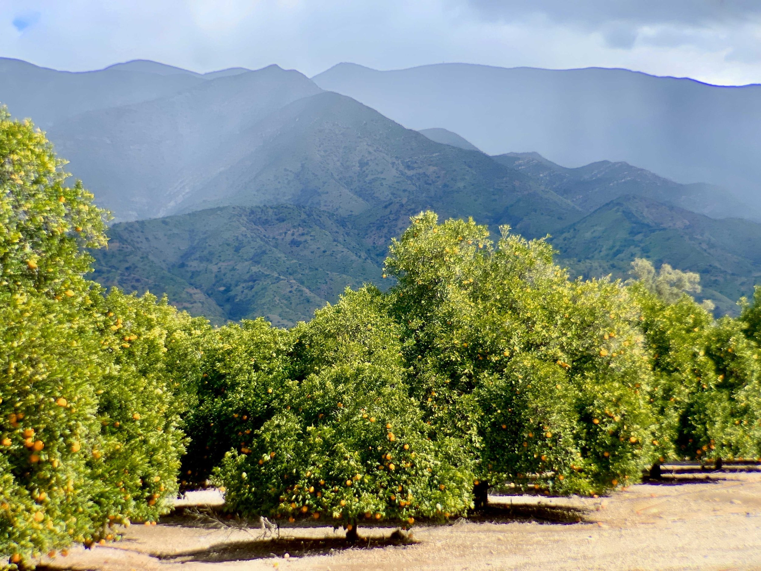 City of Ojai AGZA Green Zone® — AGZA