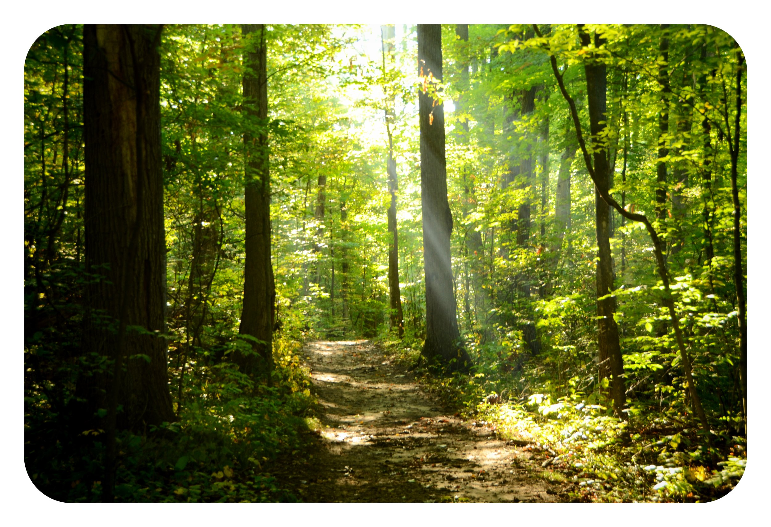 Haven Hill Trail Morning Sun 092714 DSC_5160.jpg