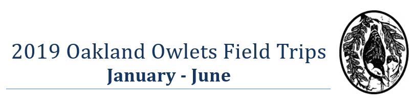 Owletts Logo.PNG