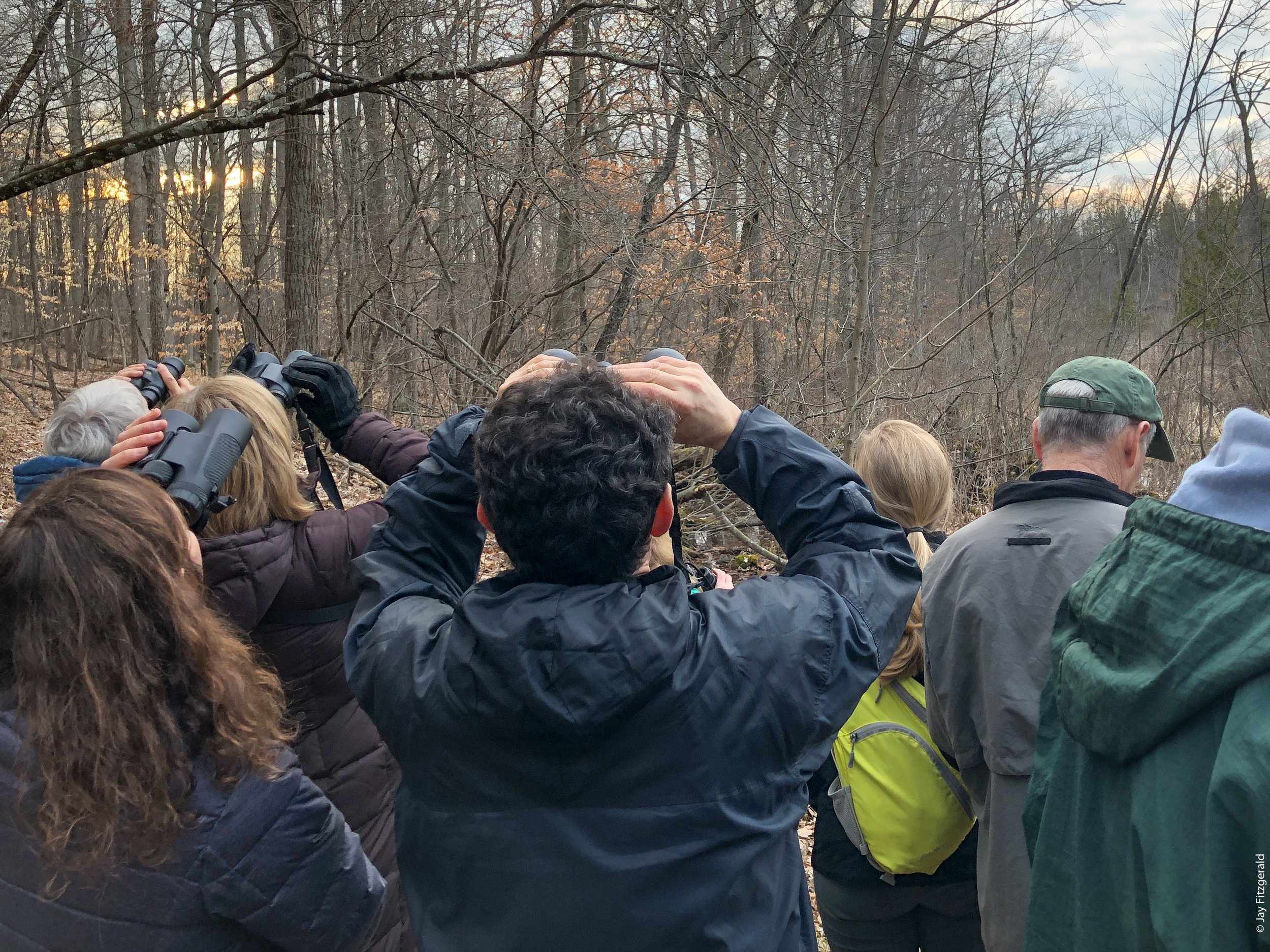 Audubon and FOHRA Members enjoying the evening woods of Haven Hill searching for birds of all species…