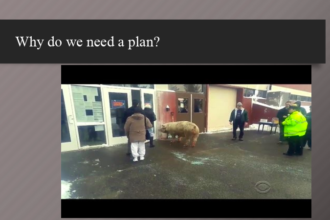 A pig at a polling place, adding some humor to a presentation on emergency management.