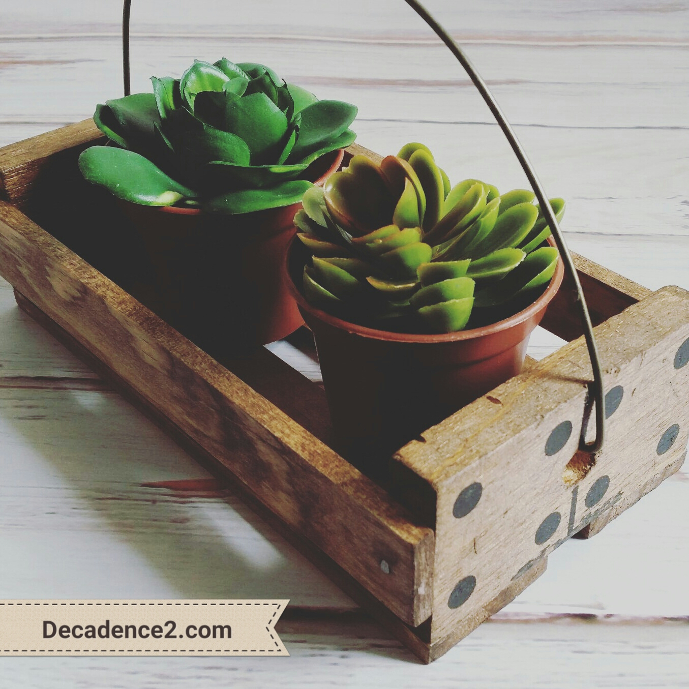 domino crate succulents decadence2dotcom