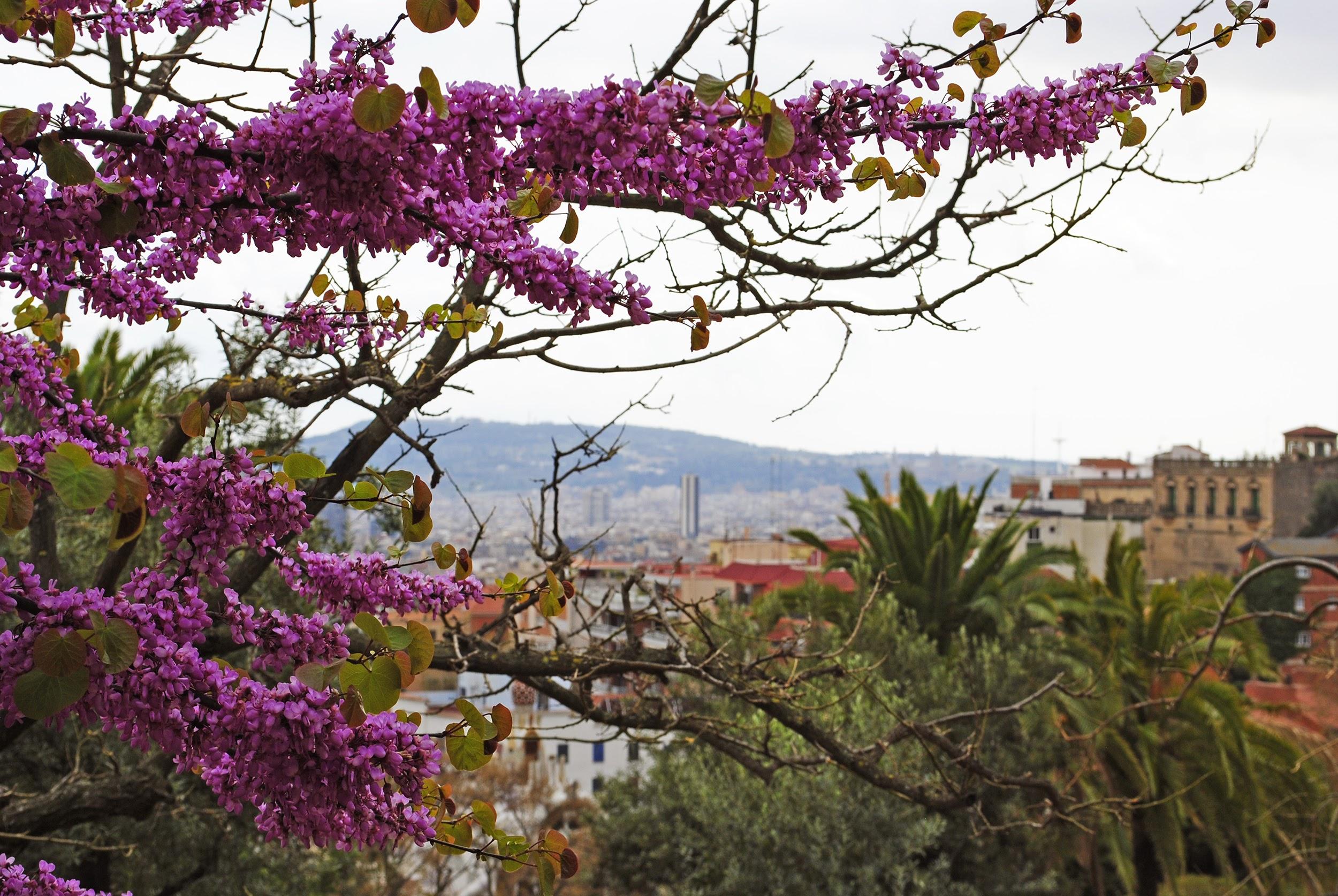 BarcelonaGuell1.jpg